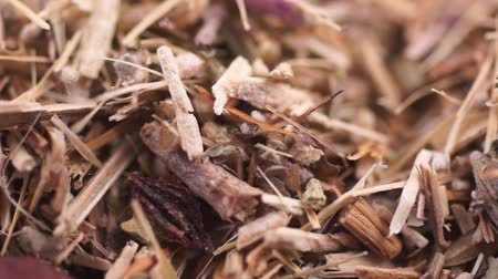 kamilla : Herbal collection for the preparation of a tonic drink. Macro video. Close-up Stock mozgókép