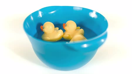 tenger : Yellow rubber ducks floating on water in blue bowl. Isolated on white background. Toy ducks.