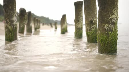 kullancs : Timber groynes on the beach at the baltic sea, Poland