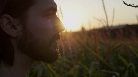 lighting up : Profile view of handsome man with beard standing in a corn field. Nature landscape in sunsetsunrise.