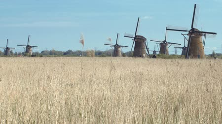 holandês : Ancient windmills near Kinderdijk, The Netherlands.