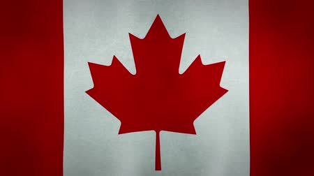 folha : The Canadian national flag blowing in the wind. Seamless loop.
