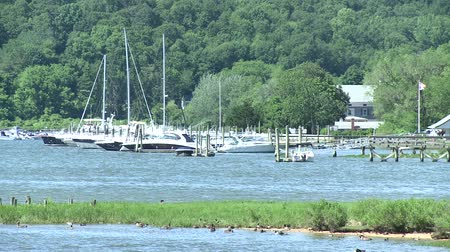 zwanenmeer : Scènes uit Cold Spring Harbor, New York