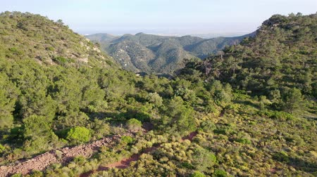 uav : Flying with drone over nature and trees in Spain | 4k