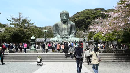 japan : KAMAKURA,JAPAN - APRIL 12, 2014: Unidentified people paying respect to great buddha (Daibutsu) sculpture of Kamakura city, Japan Stock Footage