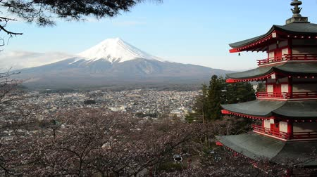 пагода :  view of Mount Fuji from Chureito Pagoda of Arakura Sengen shrine during Cherry blossoms season in Fujiyoshida city, Yamanashi Prefecture, Japan Стоковые видеозаписи