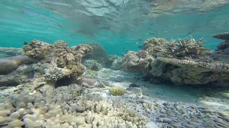 fundo : exotic marine life near Maldives island, tropical summer vacation concept