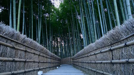 wall building feature : Arashiyama Bamboo forest in Kyoto, Japan Stock Footage