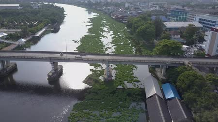 hiacynt : Water Hyacinth cover a river in Thailand