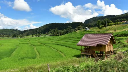 local : Rice fields on terraced at Pa Pong Pieng, Mae Chaem, Chiang Mai, Thailand