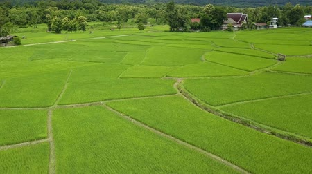 nan : Terraces rice field, a beautiful natural beauty on mountain around Wat Phuket in Pua, Nan Province, Thailand Stock Footage