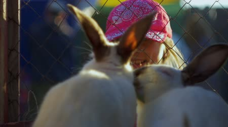 nyuszi : Girl teenager feeding rabbits out of her hand slow motion Stock mozgókép