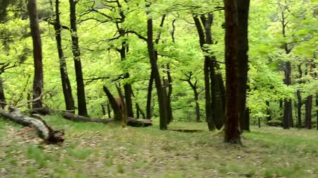 dzsungel : forest - steadicam - flying in forest