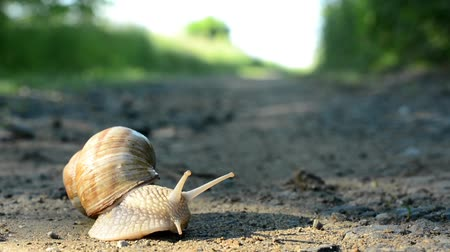 clipping path : snail crawls on path (in nature) Stock Footage