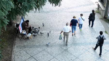 evsiz : homeless man feeds pigeons on the street - people walk around him - pavement and tree