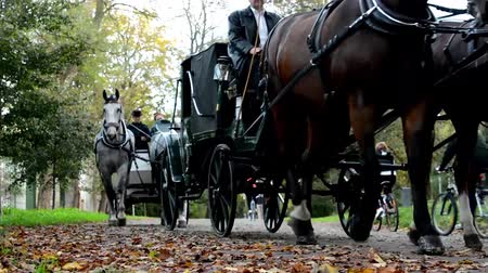 cavalinho : Autumn park (trees) - people walking - coach (horse carriage) - fallen leaves Vídeos