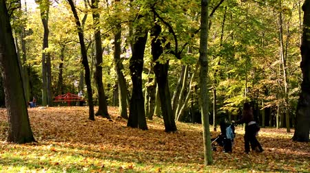 mamãe : Playground - people relax -  Autumn park (forest - trees) - Fallen leaves - family Stock Footage