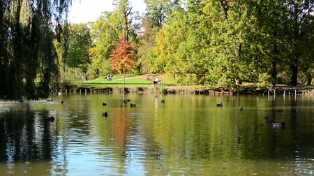 bird family : Autumn park (trees) - people relax - lake with ducks - person sit on bench