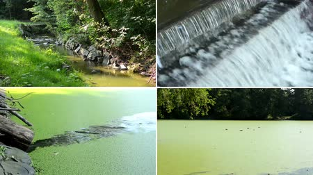 water conservation : 4K montage (compilation) - brook in the forest - aquatic cyanobacteria on the lake - brook flows into the lake - water dam on the river - trees and grass