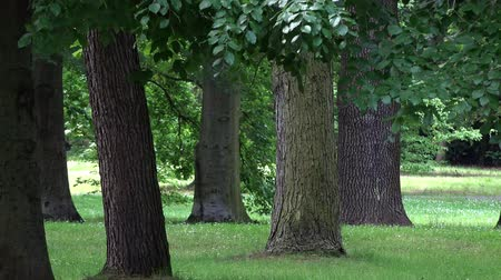 parky : Forest Park - trees - closeup