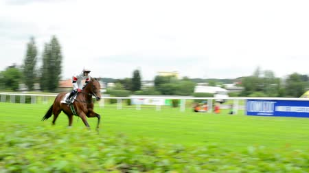 horse racing : PRAGUE, CZECH REPUBLIC - JUNE 21, 2015: Horse races - horses are preparing for the race - warm up Stock Footage