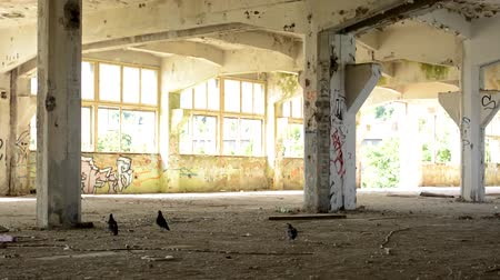 vacant : CZECH REPUBLIC, PRAGUE - JULY 10, 2015: old room in the deserted building - pigeons on the floor