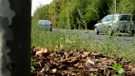 little tree stands on the side of the road in the nature - cars pass - wind shakes with plants Stock Footage