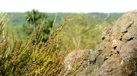 view of the plants nearby the big stone in the mountains - close up - breeze blows