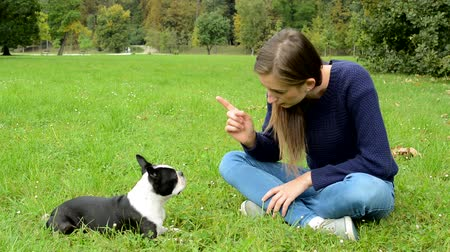 pointing dogs : young attractive woman warn french bulldog with finger gesture in the park - punish