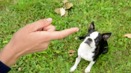 pointing dogs : woman warns french bulldog with finger in the park - detail of the dog Stock Footage
