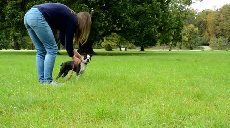 garça : young attractive woman walks a french bulldog in the park - she tack leash Stock Footage