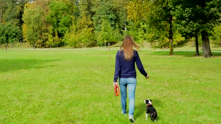 buldog : young attractive woman walk french bulldog - free - she holds leash - view of their back Wideo