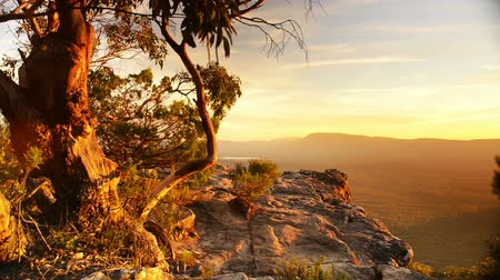 ausztrál : Stunning scenic landscape footage of Australian sunset light glowing on an old gum tree atop a mountain overlooking the Victoria Valley in the Grampians National Park, Australia