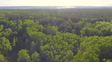 Beautiful panoramic Aerial view on forest. From above. Picture taken using drone. Top view on Trees.