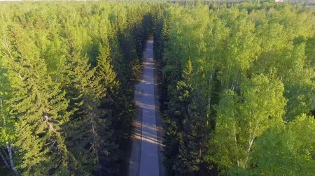 orta hava : Panoramic Aerial view on forest. Road from above. Video taken using drone. Top view on Trees. Way among trees