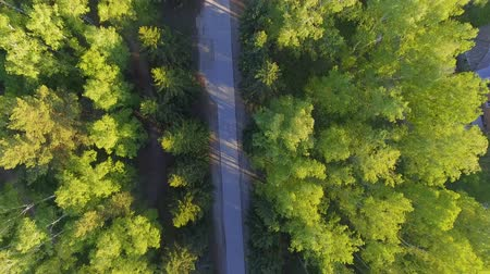 letecký : Panoramic Aerial view on forest. Road from above. Video taken using drone. Top view on Trees. Way among trees