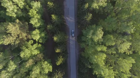 Panoramic Aerial view on forest. Road from above. Video taken using drone. Top view on Trees. Way among trees