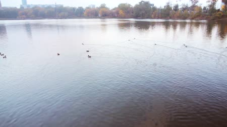 panorâmico : Autumn city and river with floating ducks Stock Footage