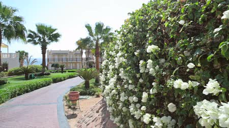 konfor : Egyptian hotel with trees and flowers Stok Video