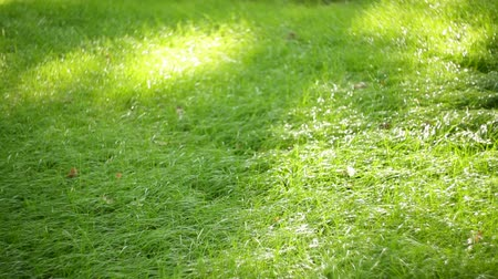 natureza : green grass in the summer park. natural background texture