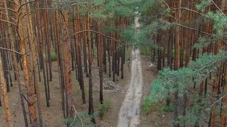 глубоко : beautiful footpath in pine forest. aerial survey