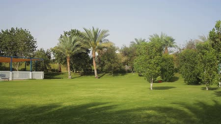 napsütéses napon : tropical green lawn with palm trees on the territory