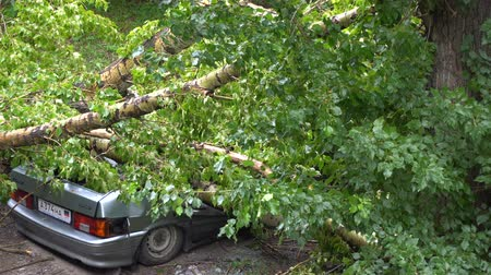 повреждение : car is crushed by a tree in the park