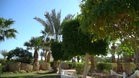 Landscape gardening with blooming flowers in Egypt. Beautiful garden of tropical plants and trees in Luxor