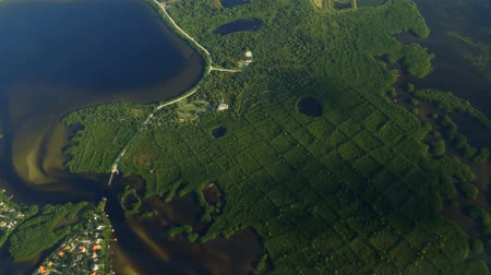 mangrovie : Mangrove Forest Aerial, Tampa Bay