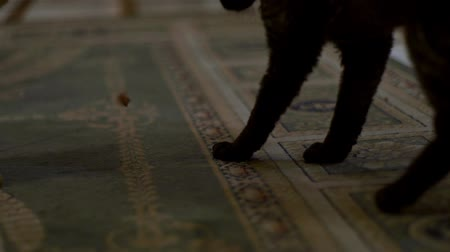 társ : cats playing on a home carpet and eat a treat