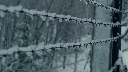 cold war : Barbed wire covered with ice