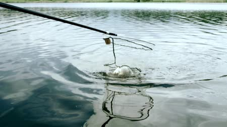 fishing pole : Fishing in river with a net. Fish splashing in net. Summer fishing