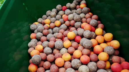 ужение : Fish bait colored balls. Fishing lure. Fishing bait