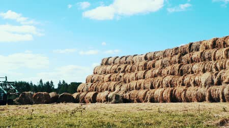 hay pile : Farming tractor moving on agricultural field on background haystacks